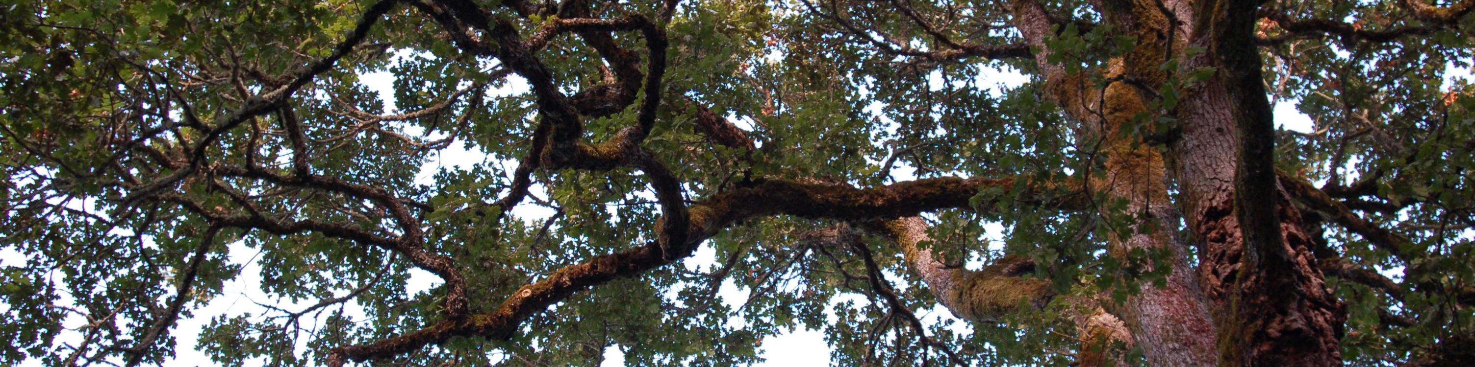 A Large Backyard Tree
